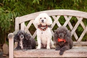 Mascots Rosie, Brady & Snoop-Dog